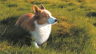«Wir bewohnen die Absenz», schreibt Houellebecq zur Trauer um den Tod seins Hundes. Michel Houellebecq