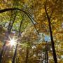 Schweizer Wald (Archiv)