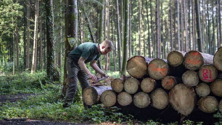 Ein Förster inspiziert ein vom Borkenkäfer befallenes Waldstück: Im Kanton Zürich müssen viele Fichten gefällt werden.