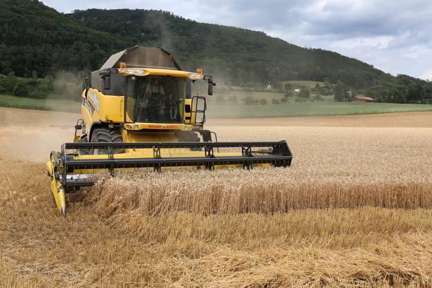 Pro Stunde schafft dieser Mähdrescher etwa eineinhalb Hektaren Weizen.