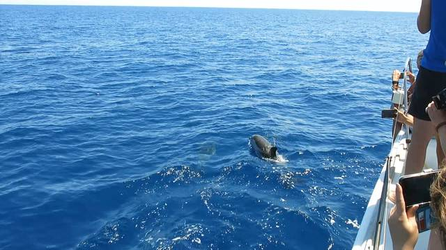 Neugierig: Immer wieder begleiten Delfine das Boot.