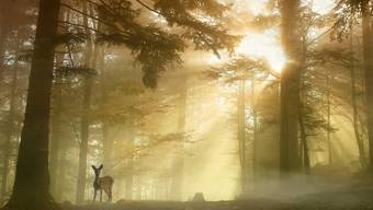 Im Visier der Jäger: Über 5000 Rehe werden im Aargau jedes Jahr geschossen, die meisten davon im Herbst und Winter.