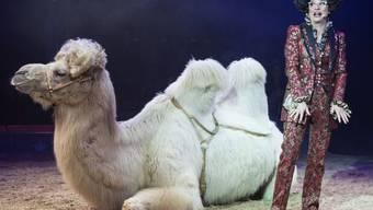 """Die Komikerin Helga Schneider am Donnerstag neben einem Kamel an der Generalprobe des Circus Knie in Rapperswil. Ob es sich bei dem Trampeltier um den """"Soucheib"""" handelt, der Schneider angespuckt hat, ist unklar. Die Frisur jedenfalls würde stimmen: Sie ähnelt derjenigen von Donald Trump."""