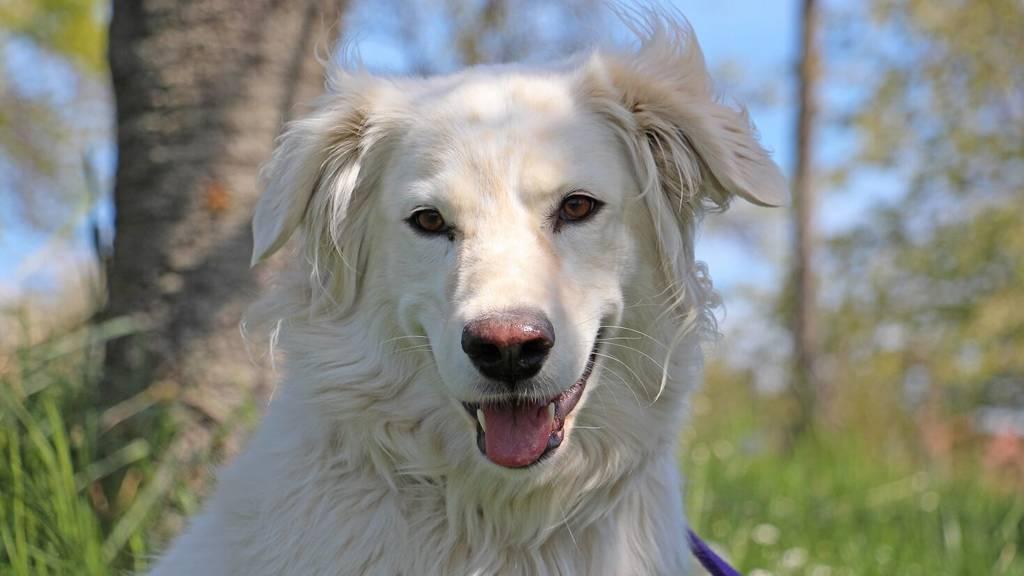 Tiervermittlung Hund Bianca