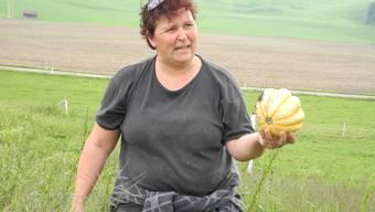 Die Kürbisse auf Monika Stalders Hof sind zwar reif aber klein