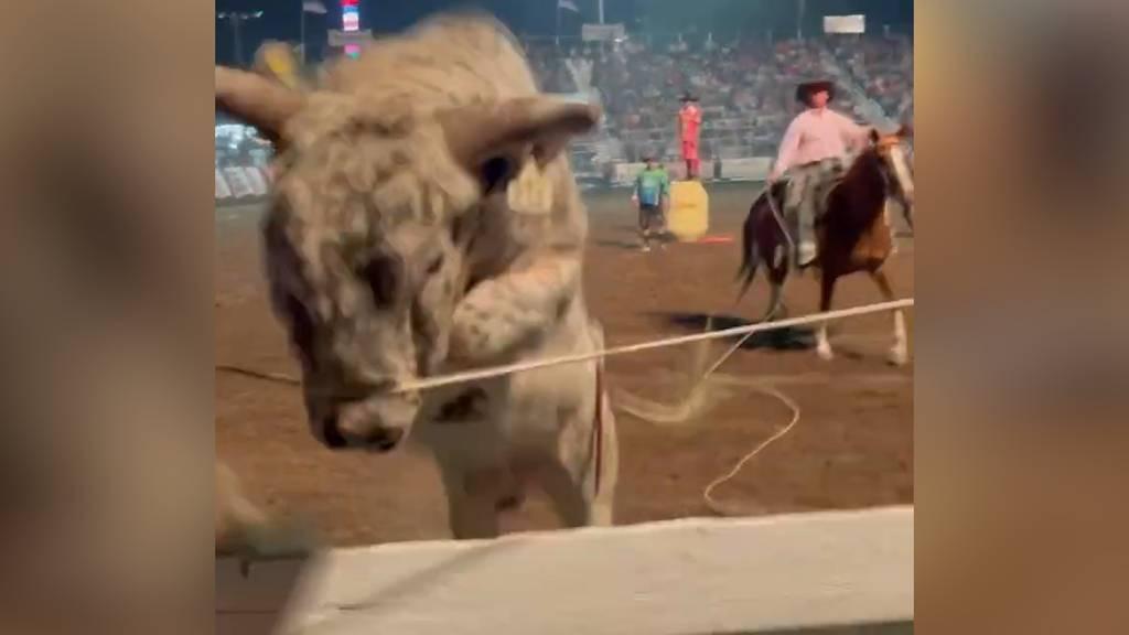 Bulle springt an Rodeo-Event in Zuschauermenge
