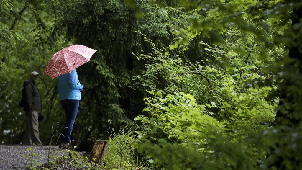 Nach dem grauen Wetter folgt wieder ein Sommertag