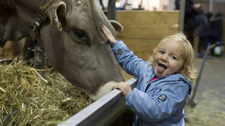 Kühe streicheln schult das Immunsystem: Forschende haben ein Molekül in Bauernhoftieren entdeckt, dass Bauernkinder vor Asthma schützt. (Archivbild)