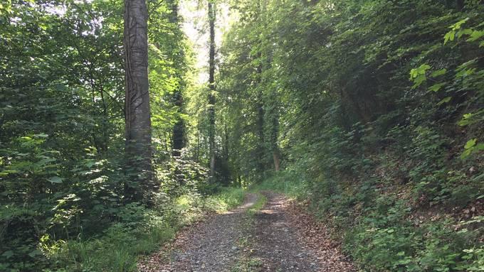 Auf der Erde gibt es heute 2,8 Milliarden Hektaren Wald. (Archiv)