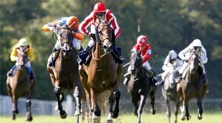 Die Pferderennen im Aarauer Schachen locken jährlich tausende Zuschauer aus dem Kanton, der Schweiz und dem Ausland an.