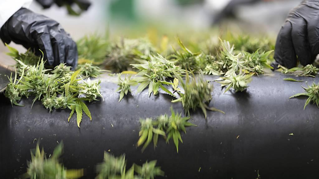 Bundesgericht kippt Tabaksteuer auf Hanfblüten