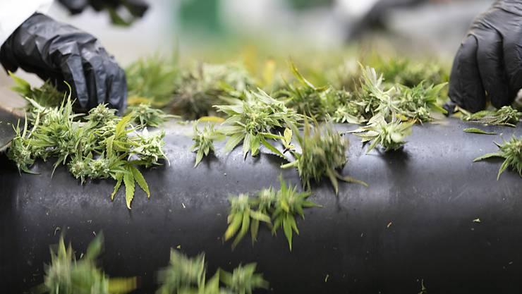 Die Tabaksteuer auf Hanfblüten mit tiefem THC-Gehalt entfällt per sofort, hat das Bundesgericht entschieden. (Archivbild)