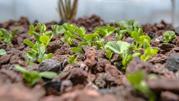 Aquaponik - Gemüseanbau ohne Boden