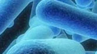 In Baselbieter Schulen wurden Legionellen gefunden.