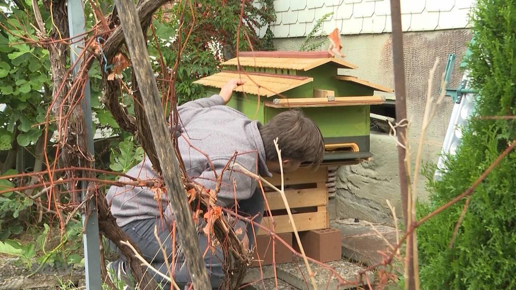 Bienenhaus-Knatsch in Rüti: Macht Gemeinde viel Lärm um nichts?