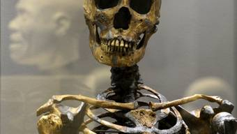 Skelett eines Neandertalers in Dresdner Museum (Symbolbild)