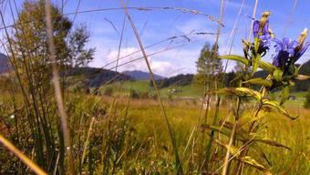 Die Natur ist in diesem Sommer besonders belastet. Wo es früher einsam war, will jetzt jeder hin.