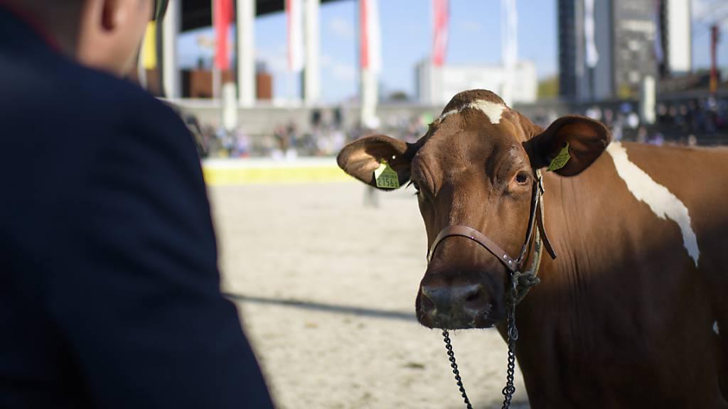 Kanton Thurgau unterstützt Olma mit 180'000 Franken