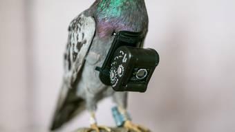 Brieftaubenfotografie von Adrian Christian Michel