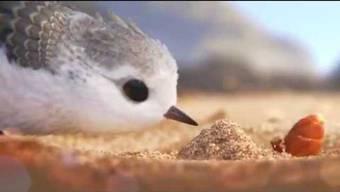 Der Animationsfilmriese Pixar, der inzwischen zum Disney-Konzern gehört, widmet dem Strandläufer einen neuen Kurzfilm.