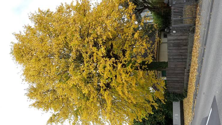 Der goldene Herbst im wahrsten Sinn des Wortes. Einmalig von Mutter Natur vollbracht.