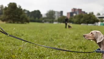 Die neuen Hundezonen in der Stadt Zürich sollen ab November gelten. (Symbolbild)