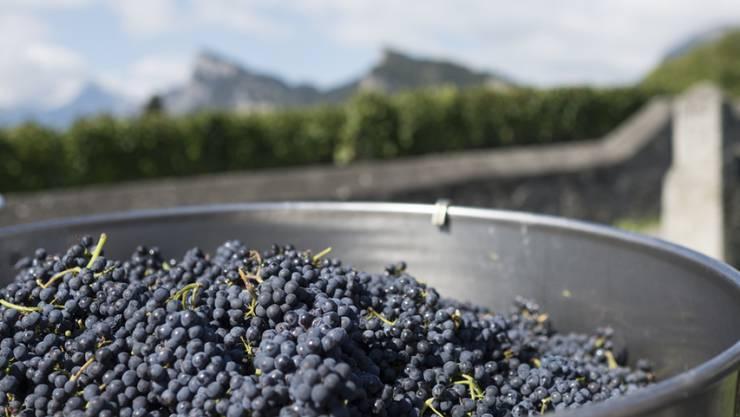 Als Reaktion auf die Betrugsfälle in der Weinwirtschaft sollte der Bund die Weinkontrolle verbessern. Das fordert das Bundesamt für Landwirtschaft (BLW) in einem Bericht. (Symbolbild)