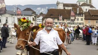 Chästag Solothurn 2018 Alpabzug