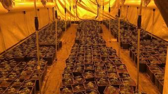 In den zwei Indoor-Hanfanlagen hatte es rund 2000 Pflanzen.