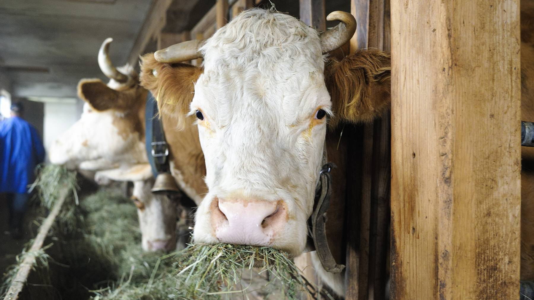 Immer noch fehlt Futter - Die Bauern leiden immer noch an den Folgen des Hitzesommers.