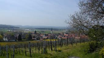 Blick aufs Zürcher Weinland. Im Bild: Benken