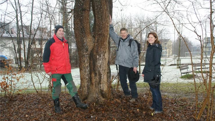 Roger Wirz, Max Jaggi und Angela Disch (von links) informierten über die Holzereiarbeiten am Pappelweg. Der grosse Feldahorn bleibt auf jeden Fall stehen.