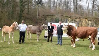 Erster Höhepunkt auf dem Weg in die Walterswiler Schwingerarena (v. l.): Fohlen Oriana, Rind Fredsola und Muni Andi, präsentiert von ihren Züchtern.