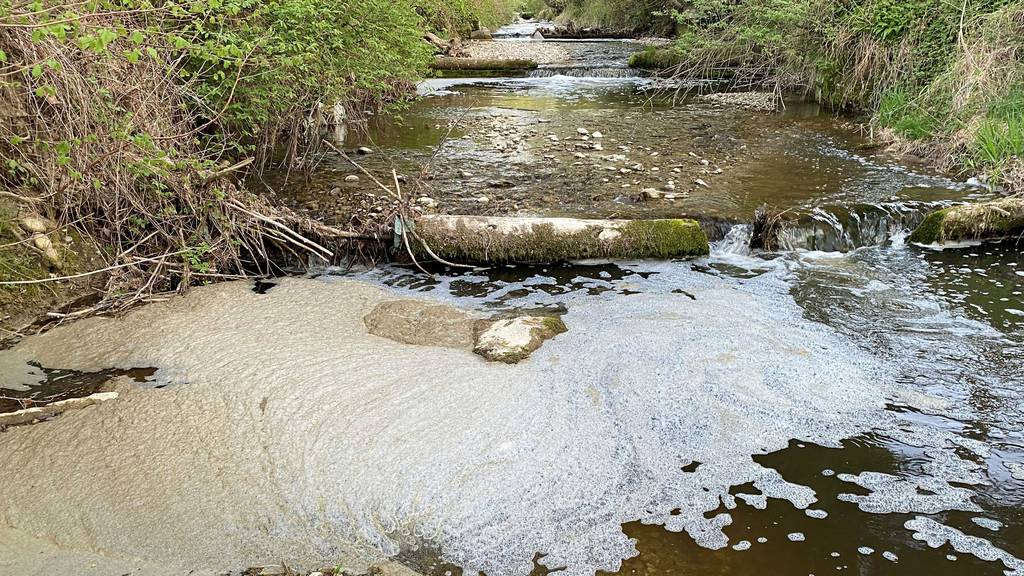 Gülle im Bach führt zu Fischsterben