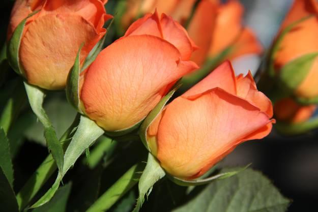 Sag es mit Rosen.