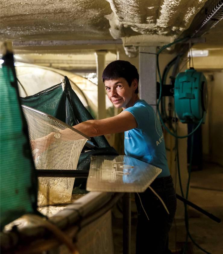 Irene Kunz beim Ausfischen der Shrimps.
