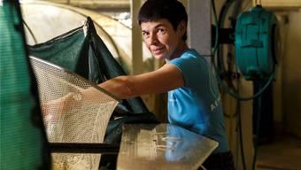 Bauernfamilie Kunz züchtet Shrimps im Schweinestall