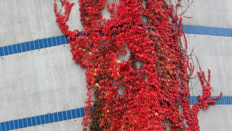 Der Mann wollte Kletterpflanzen am Kamin befestigen, da fiel er vom Dach. (Symbolbild)