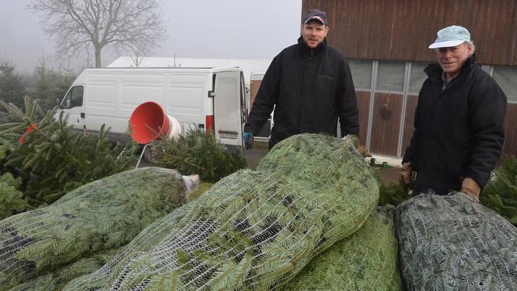 Christoph und Vater Paul Bucher verladen eine Anzahl Christbäume für eine Lieferung. es