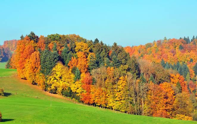 Die schönsten Herbstfarben: hier im Suhretal.
