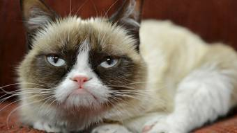 """Die Internet-Katze """"Grumpy Cat"""" ist tot. Sie wurde sieben Jahre alt. (Archivbild)"""