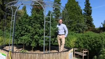 Zieht eine Riesen-Cannabis-Pflanze auf, die im Oktober dreieinhalb Meter hoch sein soll: Stevens Senn, Geschäftsführer der Pure Holding AG. Dennis Kalt