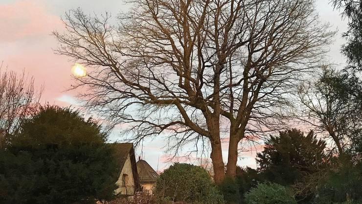 Jahrhundertealte Bäume wie diese Eiche seien keine Privatsache, selbst wenn sie in einem Privatgarten stehen, so die Petitionäre.