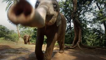 Elefanten können ganz schön gefährlich sein (Symbolbild)