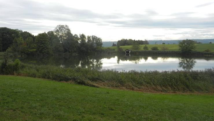Der Bellacher Weiher wurde im 15. Jahrhundert als künstlicher Fischteich angelegt und steht seit 1945 unter Schutz.