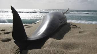 Wie hier an der Küste Neuseelands stranden immer wieder Wale an Land und sterben dort (Archiv)