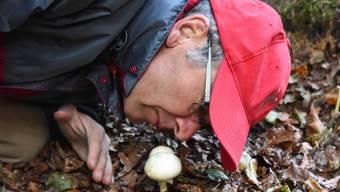 Pilzsaison Region Olten: Unterwegs mit einem Sammler