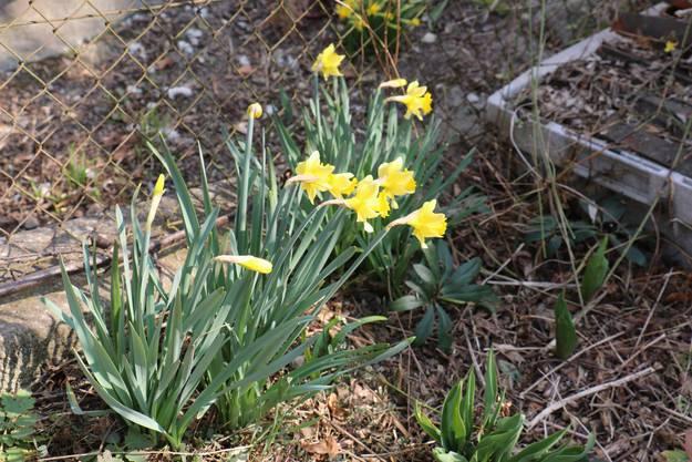 Der Frühling ist da – Impressionen aus Baden