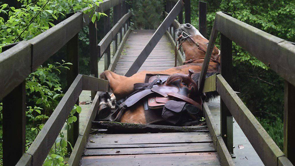 Das im eingebrochenen Brückenboden steckengebliebene Pferd konnte leicht verletzt mit einem Helikopter gebogen werden.