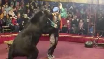 In einem Zirkus in Russland hat ein Bär eine Person während der Vorstellung angegriffen.